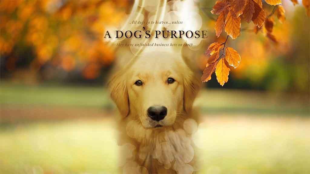 ძაღლის მიზანი