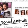 სოციალური ცხოველები