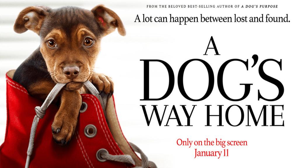 ძაღლის გზა სახლისკენ